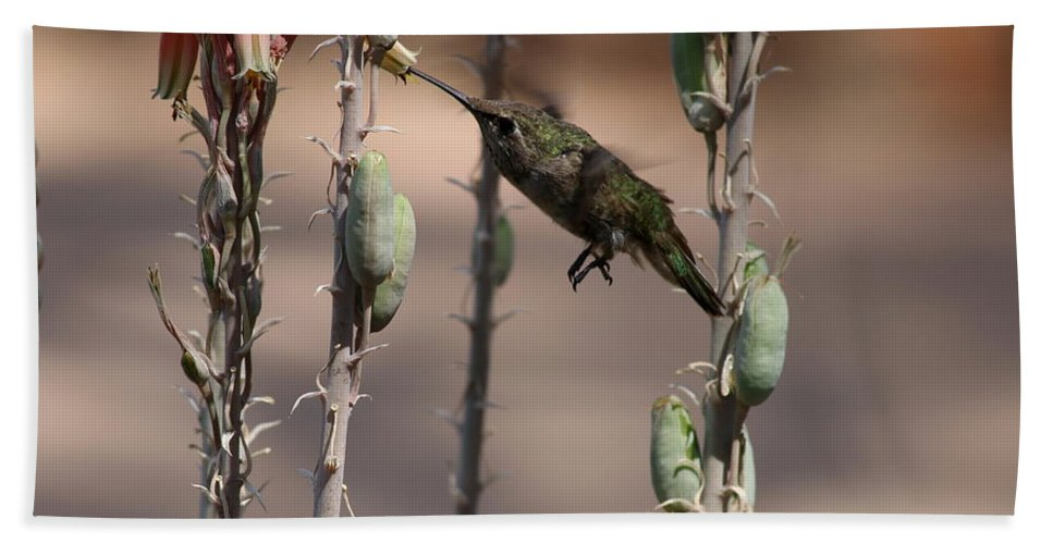 Hummingbird Bath Sheet featuring the photograph Female Anna's Hummingbird by Christiane Schulze Art And Photography