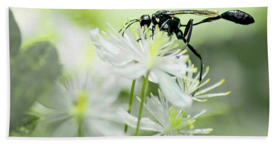 Optical Playground By Mp Ray Bath Towel featuring the photograph Female Black Mud Dauber by Optical Playground By MP Ray
