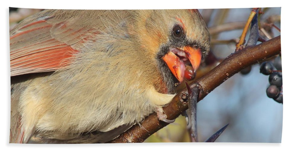 Wildlife Hand Towel featuring the photograph Thorns And Berries - Cardinal by Robert Frederick