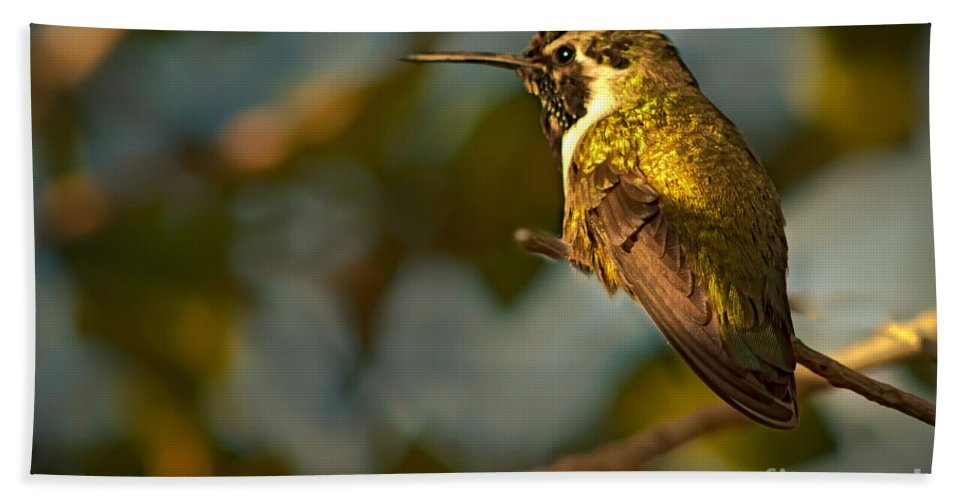 Birds Hand Towel featuring the photograph Female Costa's by Robert Bales