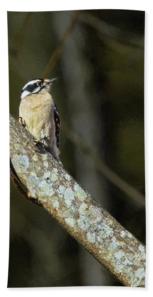 Woodpecker Hand Towel featuring the painting Female Downy Woodpecker by John Haldane
