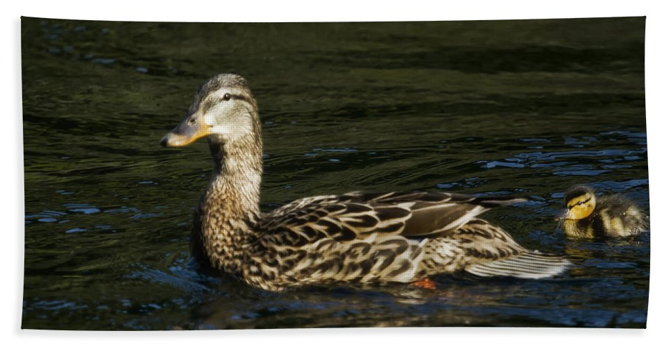 Duckling Hand Towel featuring the photograph Female Mallard And Duckling by Belinda Greb