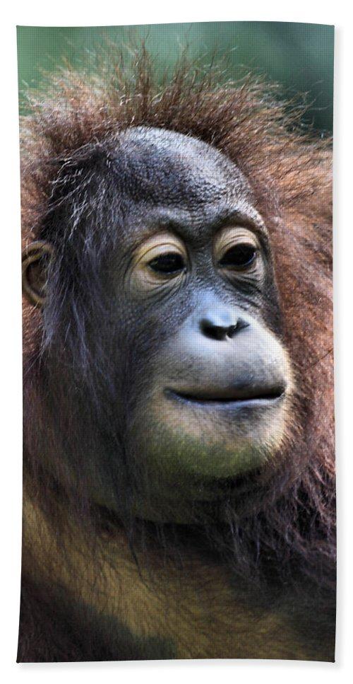 Portrait Bath Sheet featuring the photograph Female Orangutan Borneo by Carole-Anne Fooks
