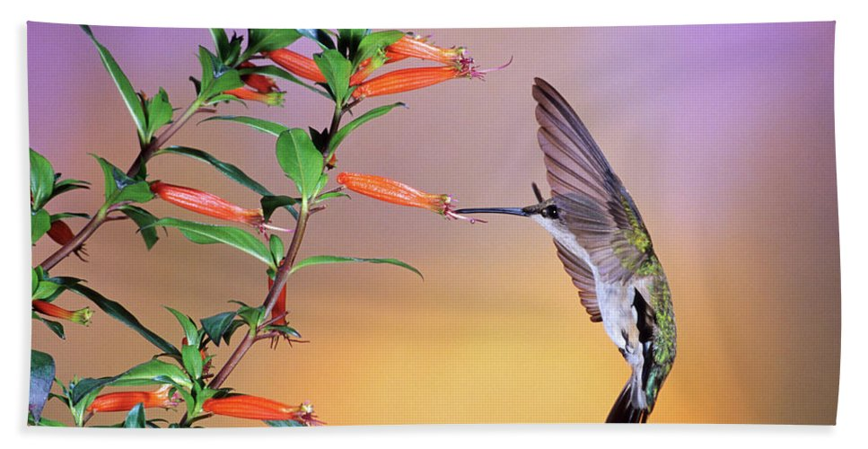 Photography Hand Towel featuring the photograph Female Ruby-throated Hummingbird by Animal Images