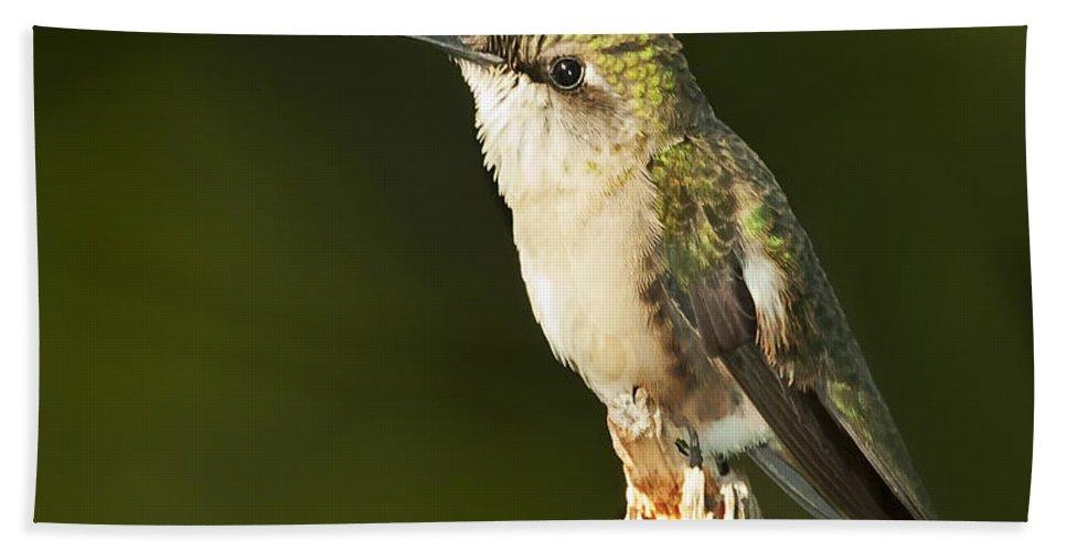 Ruby Throated Hummingbird Bath Sheet featuring the photograph Female Ruby Throated Hummingbird by John Vose