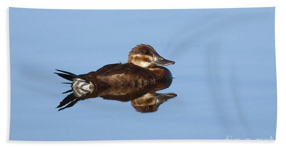Fauna Hand Towel featuring the photograph Female Ruddy Duck Oxyurus Jamaicensis by Anthony Mercieca