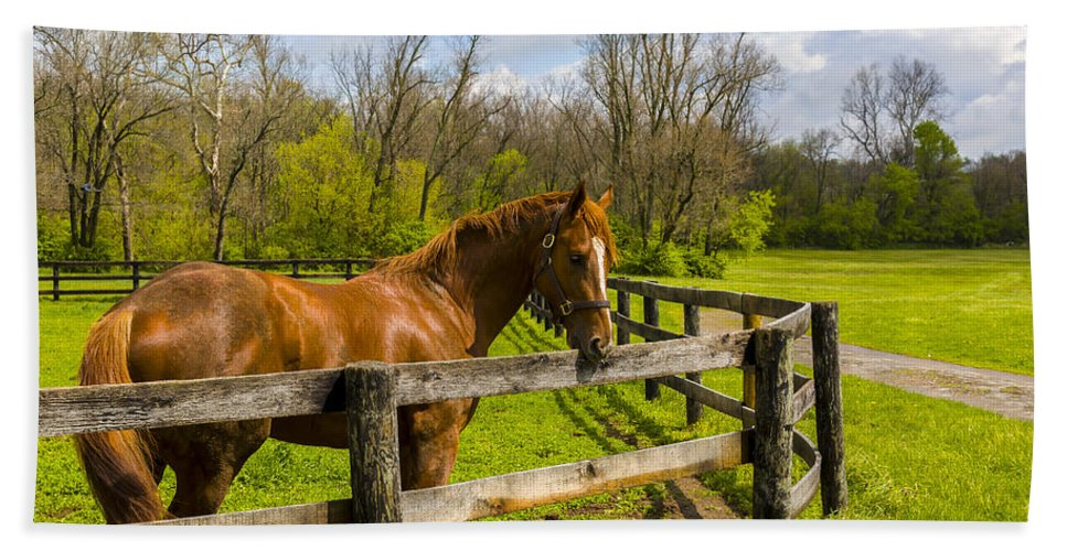 Animal Bath Sheet featuring the photograph Fences by Jack R Perry