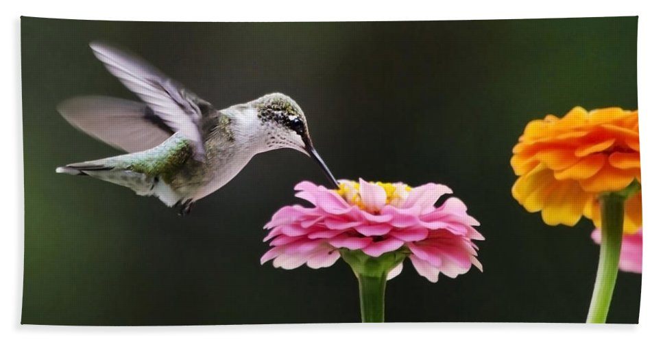 Hummingbirds Bath Sheet featuring the photograph Few And Far Between by Christina Rollo