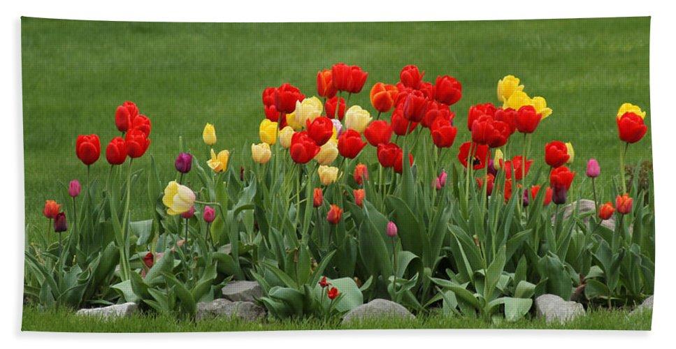 Yellow Tulips Bath Sheet featuring the photograph Ff-05 by David Yocum