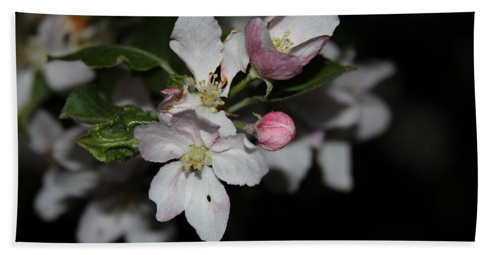 Apple Blossoms Bath Sheet featuring the photograph Ff-14 by David Yocum