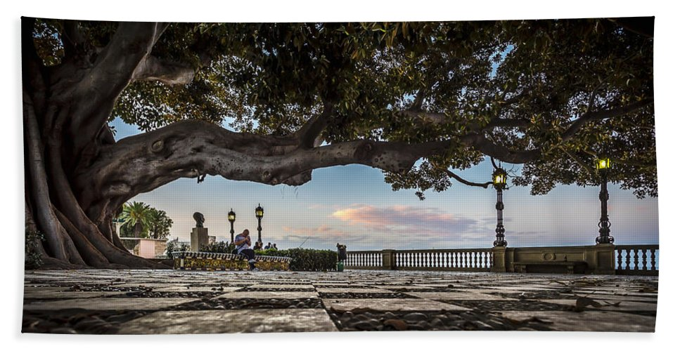 Andalucia Bath Sheet featuring the photograph Ficus Magnonioide In The Alameda De Apodaca Cadiz Spain by Pablo Avanzini