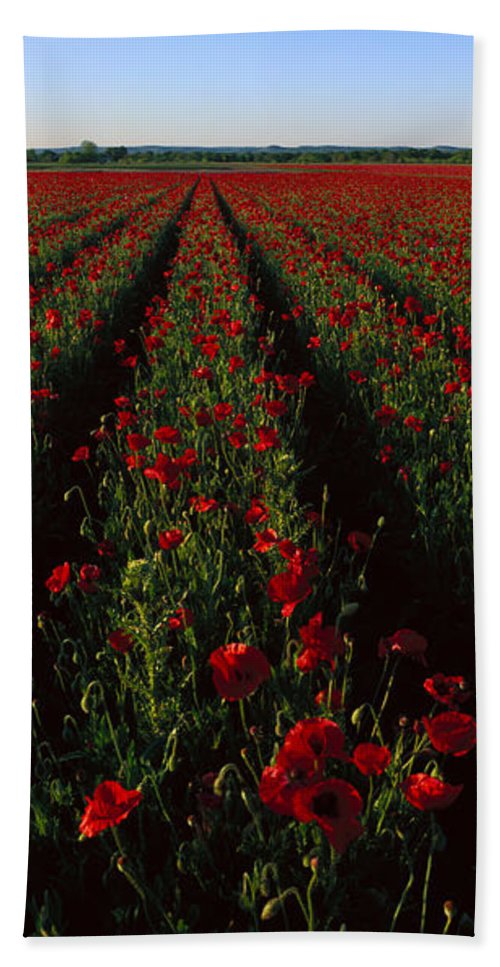 Photography Hand Towel featuring the photograph Field Of Poppies by Panoramic Images