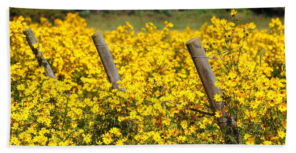 Yellow Bath Sheet featuring the photograph Field Of Yellow by Carol VanDyke
