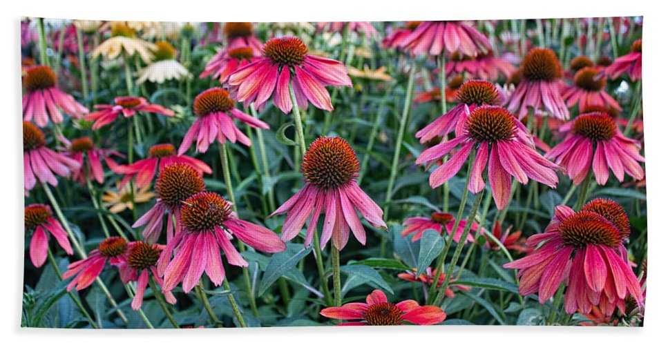 Coneflower Hand Towel featuring the photograph Fields Of Coneflower by Barbara McMahon