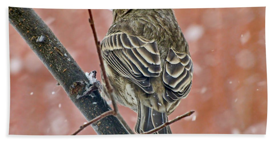 Nature Bath Sheet featuring the photograph Finch On A Snowy Day by Debbie Portwood