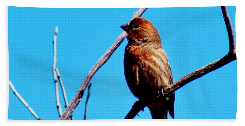 Bird Hand Towel featuring the photograph Finch On Branch 031015a by Edward Dobosh