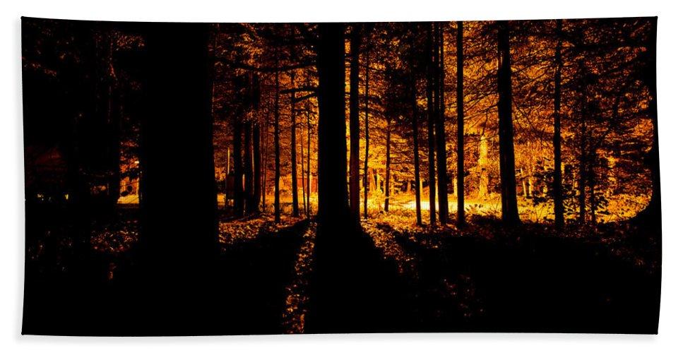 Back Hand Towel featuring the photograph Fir Trees Back Lit by U Schade