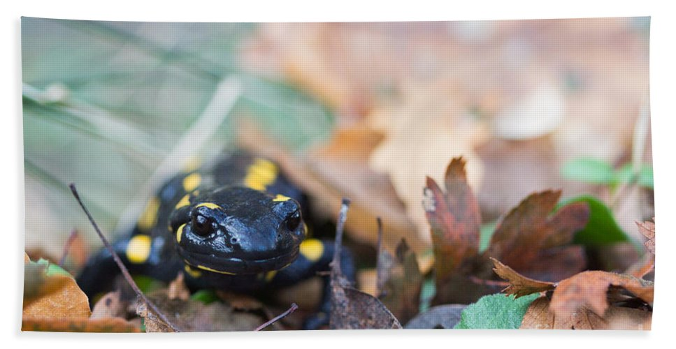 Animals Hand Towel featuring the photograph Fire Salamander Dry Leaves by Jivko Nakev