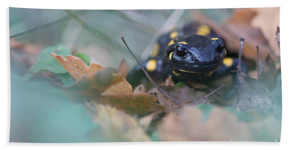 Animals Hand Towel featuring the photograph Fire Salamander Front View by Jivko Nakev