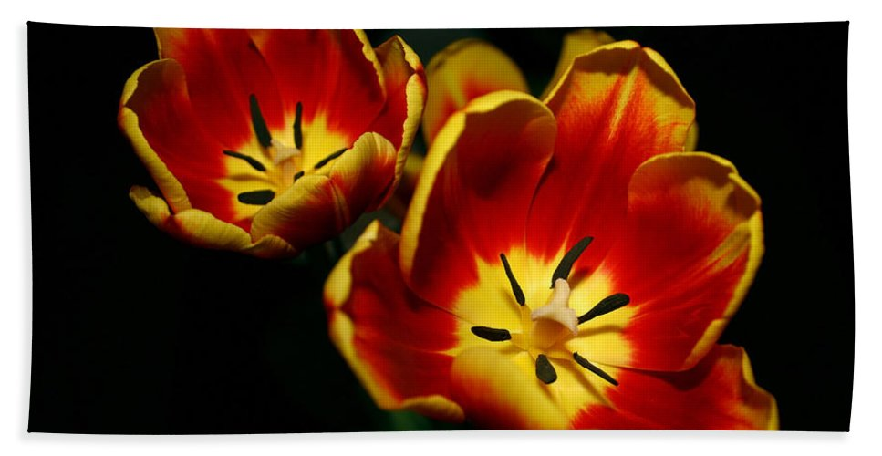Flowers Bath Sheet featuring the photograph Fire Tulip Flowers by Nikki Vig