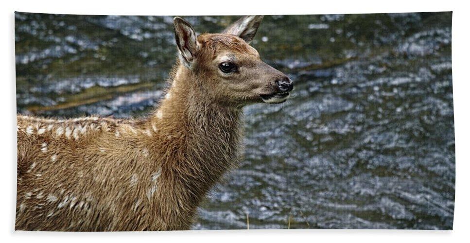 Firehole River Elk Fawn Bath Sheet featuring the photograph Firehole River Elk Fawn by Wes and Dotty Weber