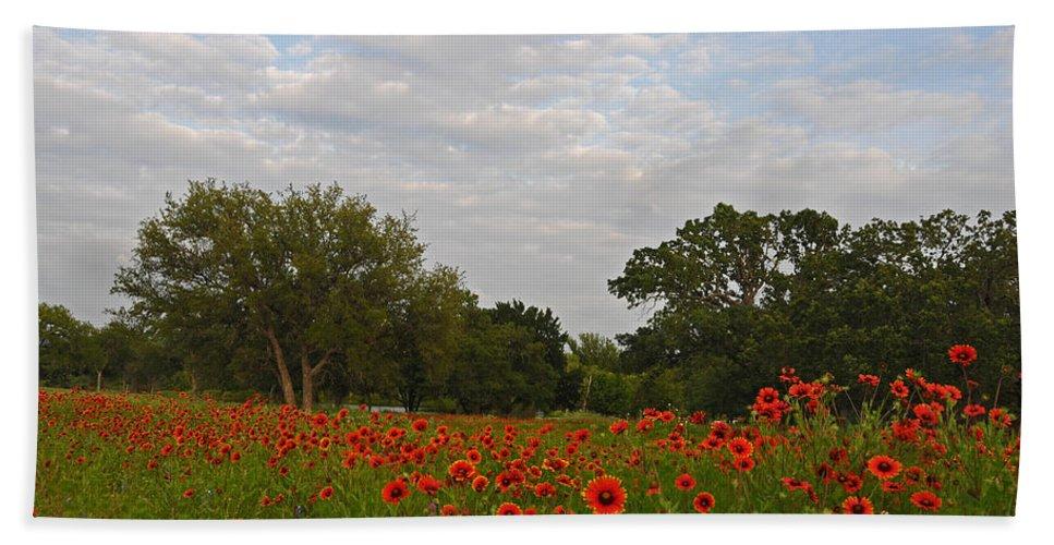Wildflowers Bath Sheet featuring the photograph Firewheel Field by Lynn Bauer