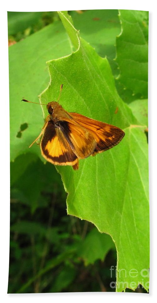 Firey Skipper Butterfly Images Butterfly Prints Nature Prints Naturalist Natural Science Meadow Ecosystem Maryland Butterfies American Butterflies Orange Butterflies Entomology Aerial Insect Images Pollinators Meadow Wildlife Wild Meadow Biodiversity Preservation Forest Flora Oldgrowth Forest Conservation Colorful Critter Prints Office Art Wall Art Green Design Green Interior Design Nature Photography Orange Butterfly Identification Forest Creatures Bugs Natural World Nature Walk Hand Towel featuring the photograph Firey Skipper Butterfly by Joshua Bales
