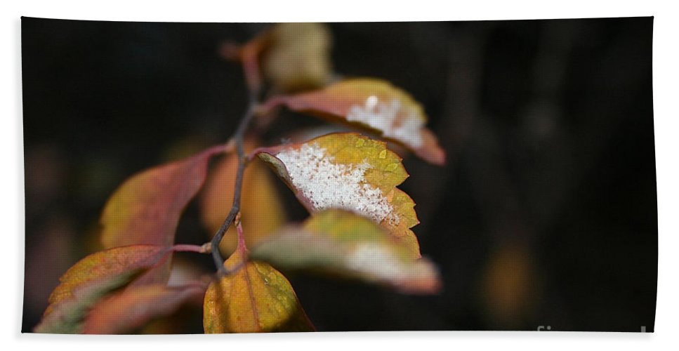 Outdoors Hand Towel featuring the photograph First Dusting by Susan Herber