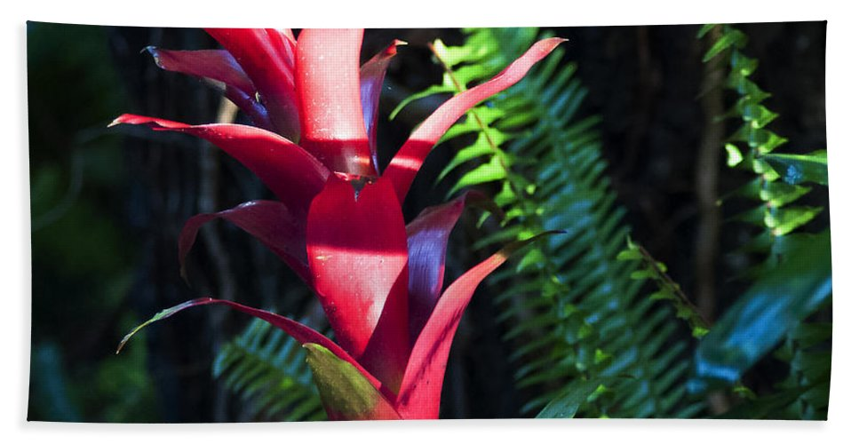 Bromeliad Bath Towel featuring the photograph First Light by Norman Johnson