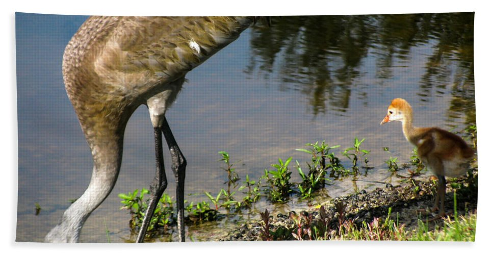 Sandhill Crane Chicks Hand Towel featuring the photograph First Time At The Lake by Zina Stromberg