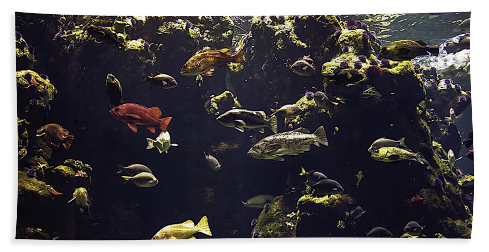 Fish Aquarium Bath Sheet featuring the photograph Fish Aquarium by Garry Gay