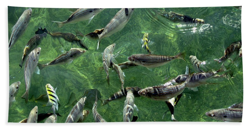 Water Hand Towel featuring the photograph Fish by Bob Slitzan