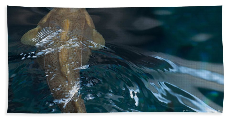 Fish Bath Sheet featuring the photograph Fish Of The St. Lawrence by Bianca Nadeau