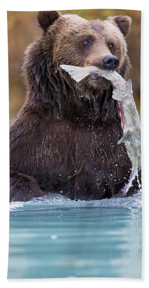 Alaska Adventure Hand Towel featuring the photograph Fish On by Rob Daugherty