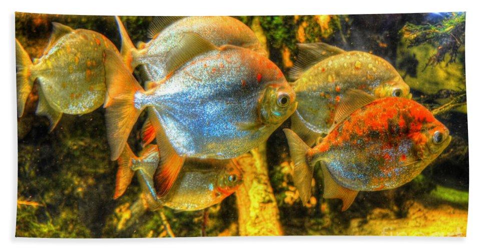 Fish Bath Sheet featuring the photograph Fishfull Thinking by Debbi Granruth