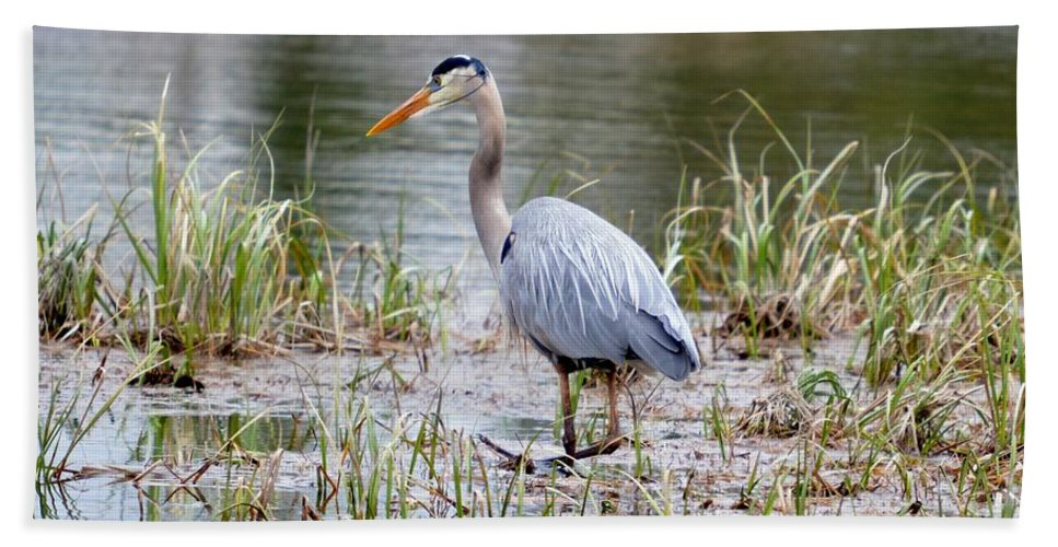 Great Blue Heron Bath Sheet featuring the photograph Fishing Heron by Thomas Phillips