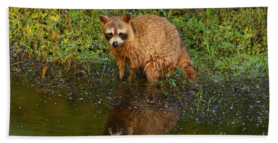 Raccoon Bath Sheet featuring the photograph Fishing In Morning Light by Deanna Cagle