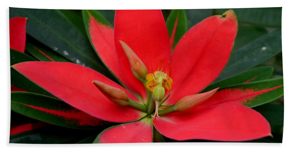 Flame Of Jamaica Bath Sheet featuring the photograph Flame Of Jamaica by Christiane Schulze Art And Photography