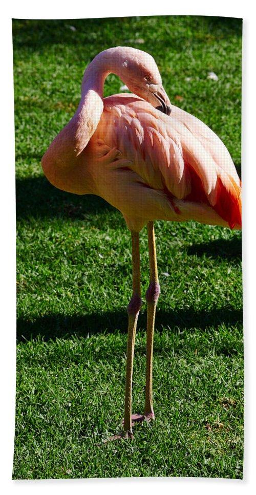 Atlantic Ocean Bath Sheet featuring the photograph Flamingo by Jouko Lehto