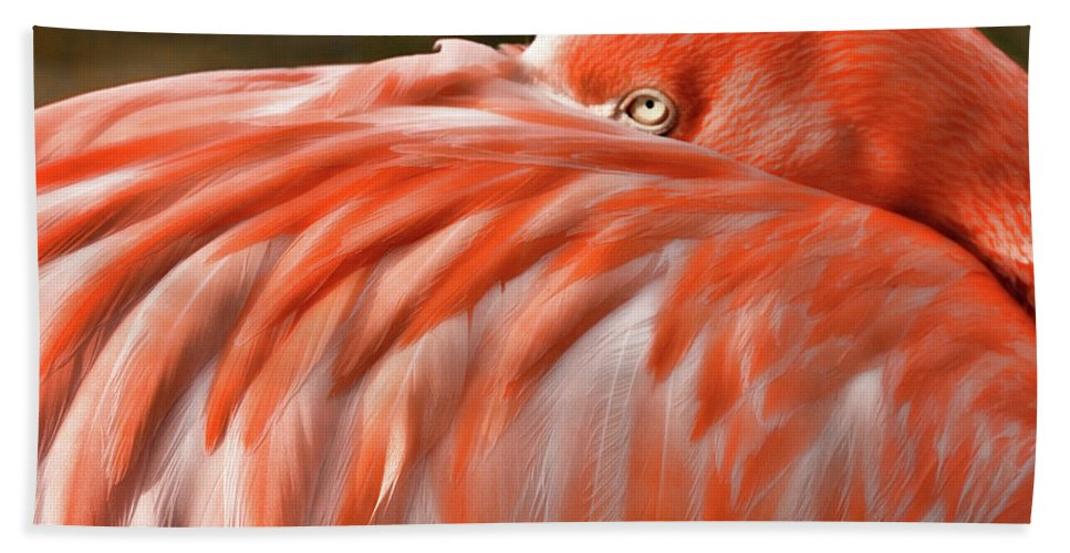 Okc Hand Towel featuring the photograph Flamingo by Lana Trussell