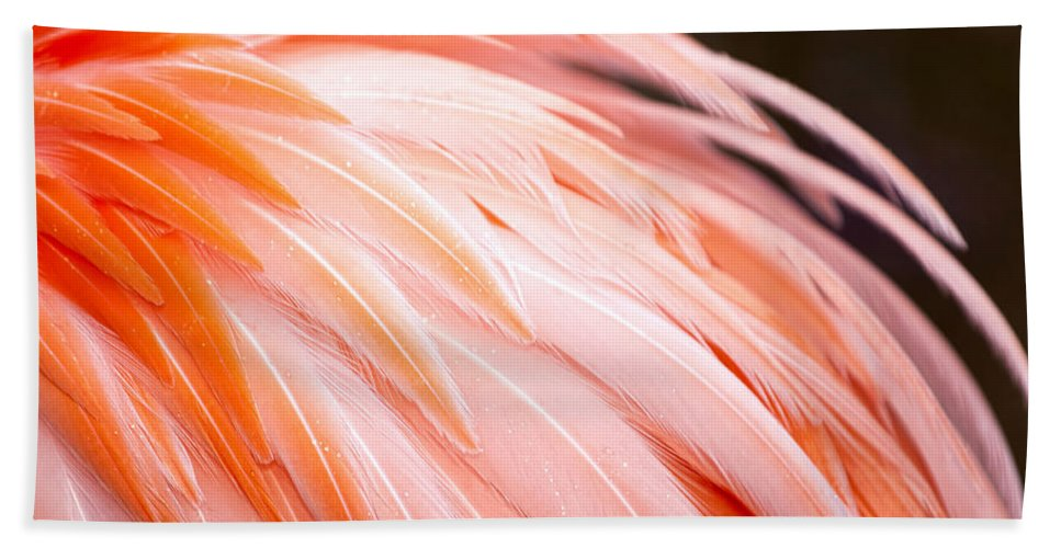 Flamingo Bath Sheet featuring the photograph Flamingo by Laura Greene
