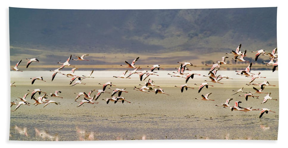 Action Bath Towel featuring the photograph Flamingos Flying Over Water by Jonathan Kingston