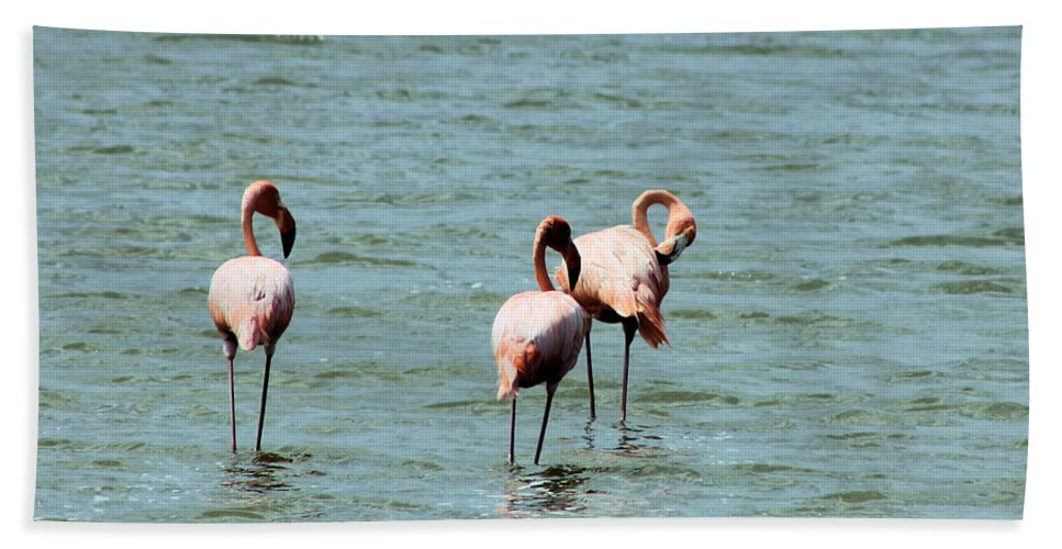 Flamingos Hand Towel featuring the photograph Flamingos Gathering Together by Christy Gendalia