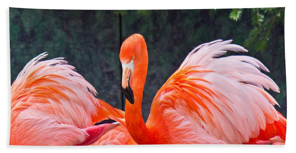 National Bath Sheet featuring the photograph Flamingos by Jonny D