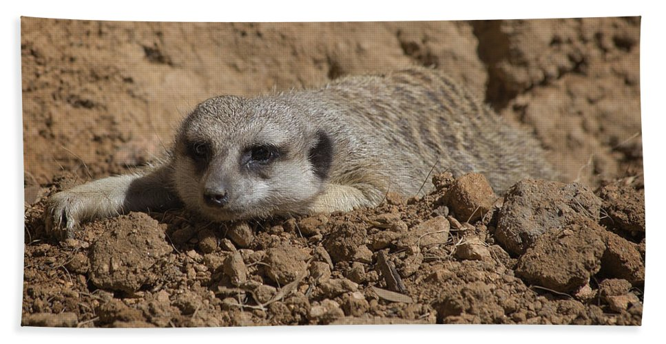 Meerkat Hand Towel featuring the photograph Flatout by TN Fairey