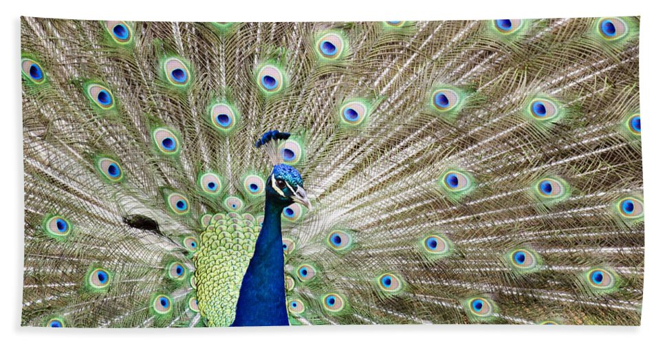 Peacock Bath Sheet featuring the photograph Flaunting by Ricky Barnard