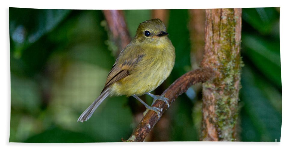 Flavescent Flycatcher Hand Towel featuring the photograph Flavescent Flycatcher by Anthony Mercieca
