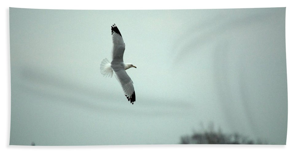 Seagull Bath Sheet featuring the photograph Flight by Linda Kerkau