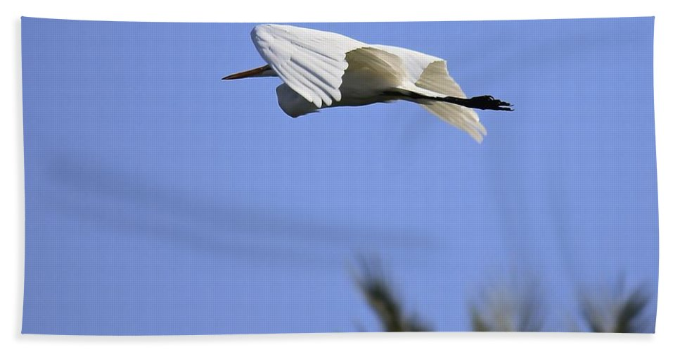 Great White Egret Hand Towel featuring the photograph Flight Of The Egret by Penny Meyers