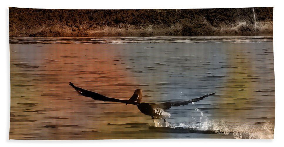 Bird Bath Sheet featuring the photograph Flight Of The Pelican-featured In Wildlife-newbies And Comfortable Art Groups by Ericamaxine Price